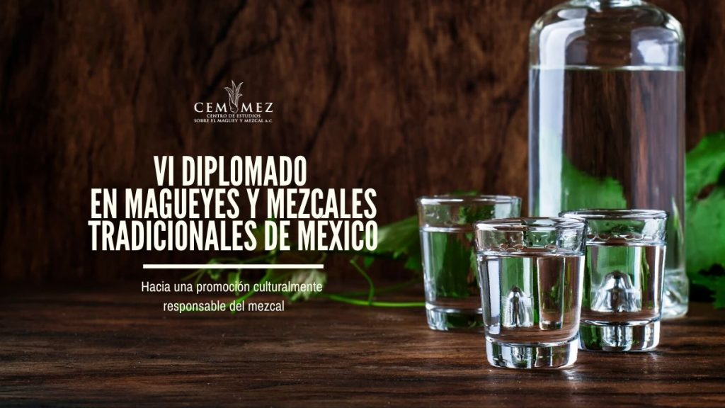 VI Diplomado en magueyes y mezcales tradicionales de México