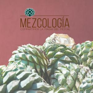 Blog Mezcología